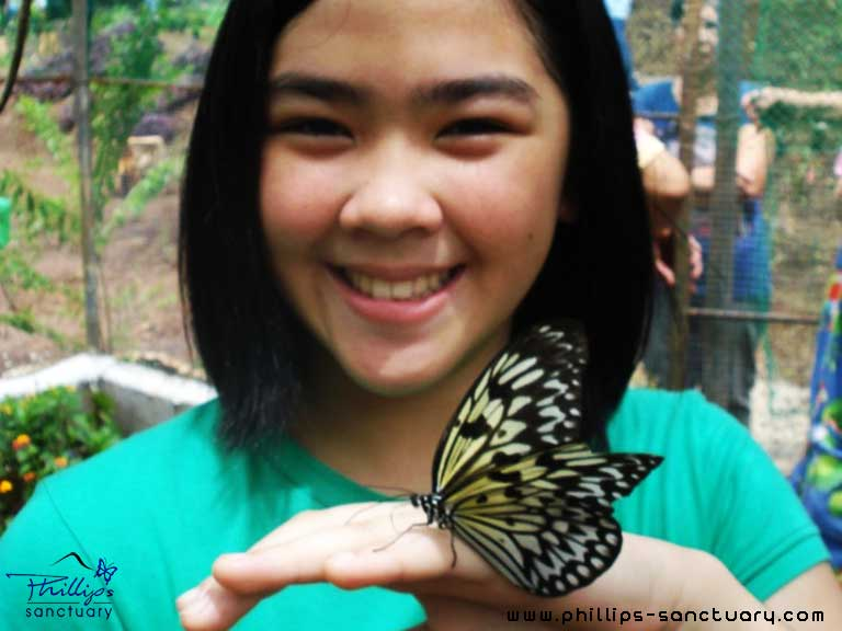 butterfly garden Antipolo, Philippines