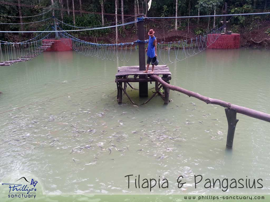 Phillip's Sanctuary Fish pond Antipolo